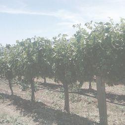 Kosta Browne Pinot Noir Keefer Ranch Vineyard 2006