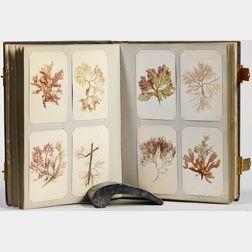 Seaweed and Botanical Samples Album, c. 1864.