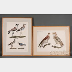 Louis Bouquet (French, 1765-1814), After Jacques Barraband (French, 1767-1809) Two Ornithological Prints: Plate 3 from H.N. Zoologie...
