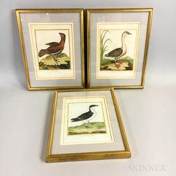 Martinet, François-Nicolas (1731-1800) Three Ornithological Prints [from] L'Histoire des Oiseaux  , 1787-1790.