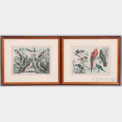 British School, 19th/20th Century      Four Framed Ornithological Prints