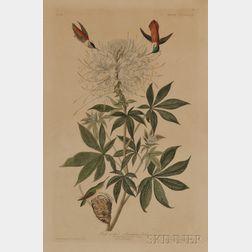 Audubon, John James (1785-1851) Ruff-Necked Humming-Bird