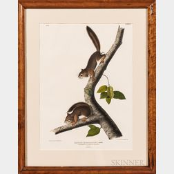 John James Audubon (1785-1851) Richardsons Columbian Squirrel