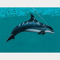 Richard Ellis (American, b. 1938)      Bottle-nosed Dolphin