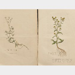 Curtis, William (1746-1799) Four Hand-colored Botanical Illustrations.
