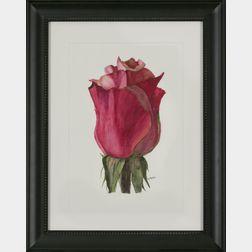 Peg Martin (Massachusetts, b. 1941), Blooming Rose