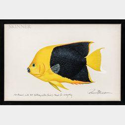 Richard Ellis (American, b. 1938)      Angelfish.