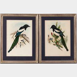 Gould, John (1804-1881) and Herbert Davis Richter (1874-1955) Two Magpie Prints.