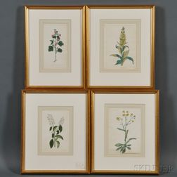 Anglo/American School, 19th/20th Century      Four Botanical Watercolors