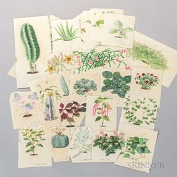 Marinsky, Harry (1909-2008) Forty-eight Original Watercolors of Plants [from] The Womans Day Book of House Plants, by Jean Hersey, c.