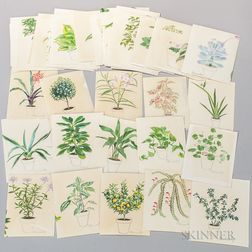 Marinsky, Harry (1909-2008) Fifty-four Original Watercolors of Plants [from] The Womans Day Book of House Plants, by Jean Hersey, c. 1