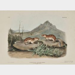 Audubon, John James (1785-1851) California Marmot Squirrel,   Plate CIX.
