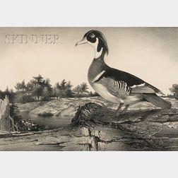 Stow Wengenroth (American, 1906-1978)      Wood Duck (Greenport, New York)