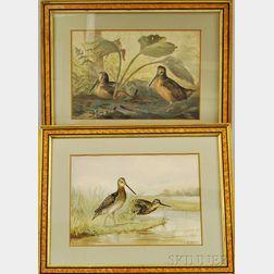 Alexander Pope Jr. (American, 1849-1924)    Two Works: The American Snipe
