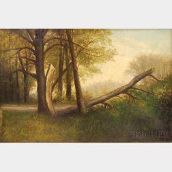 American School, 19th Century      Landscape with Fallen Tree.