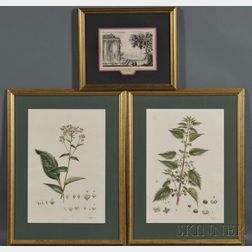 Three Framed Engravings:      Continental School, 18th Century, Two Hand-colored Botanical Illustrations