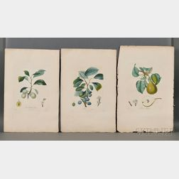 Poiteau, Pierre Antoine (1766-1854) Eight Plates of Tree Fruits.