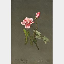 Martin Johnson Heade (American, 1819-1904)      Pink Rose