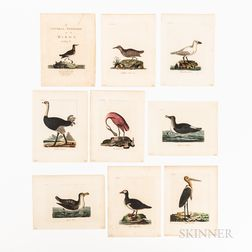 Nine Hand-colored Engraved Plates from John Latham A General Synopsis of Birds, Vol. III
