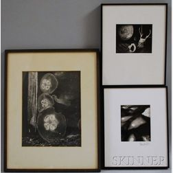 American School, 20th Century      Lot of Four Works: Jellyfish, Frozen Stream, Horse's Head in Profile