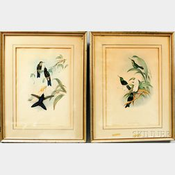 After Henry Constantine Richter and John Gould (British, 19th Century)      Pair of Hummingbird Prints: Eugenes Fulgens