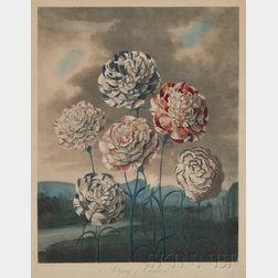(Botanical Illustration), Thornton, Dr. Robert John