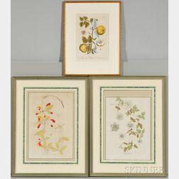 Three Framed Botanical Prints