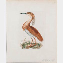 Selby, Prideaux John (1788-1867) Three Ornithological Prints [from] Illustrations of British Ornithology  , c. 1840.