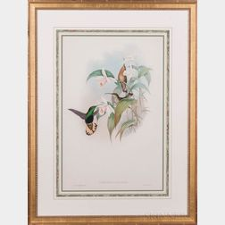 Gould, John (1804-1881) Eight Hummingbird Prints.