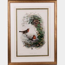 Gould, John (1804-1881) and Henry Constantine Richter (1821-1902) Erythacus Rubecula, European Robin, Robin Redbreast.