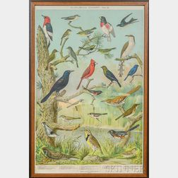 Framed Audubon Chart No. 2 Lithograph