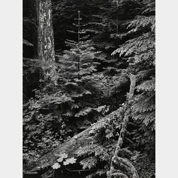Ansel Adams (American, 1902-1984)      Forest, Early Morning, Mount Rainier Park, Washington