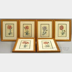 Six Hand-colored Engraved Book Illustrations of Carnations