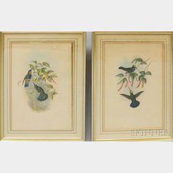 Pair of Framed Gould Richter Bird Prints