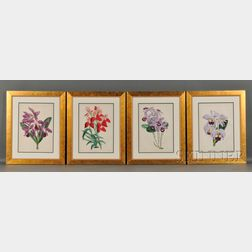 Four Hand-colored Lithograph Book Illustrations of Orchids