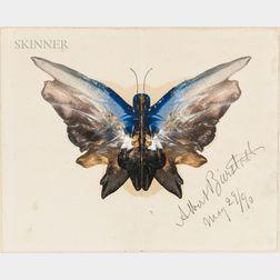 Albert Bierstadt (American, 1830-1902)      Butterfly