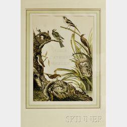 """Framed """"Neder-Landsch Vogellen"""" Color Collotype"""