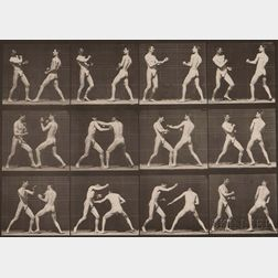 Eadweard Muybridge (British, 1830-1904)      Plate 338 (Men Boxing) from Animal Locomotion