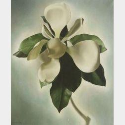 John C. E. Taylor (American, b. 1902)  Magnolia Flower