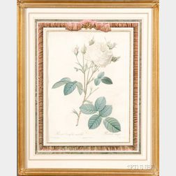 French Hand-colored Botanical Engraving by Pierre-Joseph Redoute