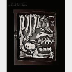 Olivia Parker (American, b. 1941)      Site II, Deer, 1981, printed 1982.