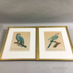 Seven Colored Bird Lithographs
