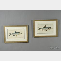 Four Decorative French Hand-colored Etchings of Fish by M.E. Bloch