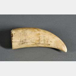Engraved Whale's Tooth