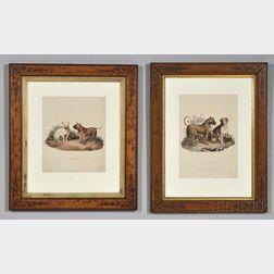 Edwards, Sydenham Teast (1768-1819) Two Framed Dog Prints.