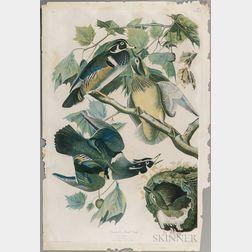 Audubon, John James (1785-1851) Summer Wood Duck  , Plate 391.