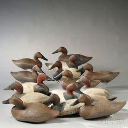 Fourteen Canvasback Duck Decoys