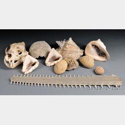 Group of Natural History Items