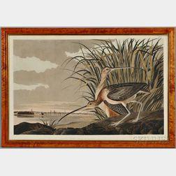 Audubon, John James (1785-1851) Long Billed Curlew.   Plate CCXXXI.