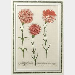 Pair of Framed Botanical Engravings